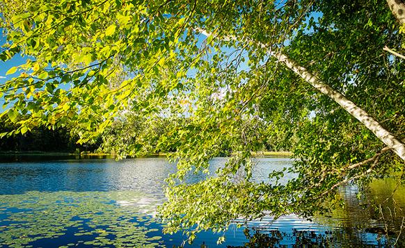 Lake at Rockefeller State Park Preserve. Courtesy Creative Commons. Photo by Mat McDermott